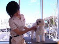 大阪府吹田市 トリマー急募★動物病院併設★明るくゆったりした空間です