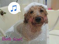 急募!浦安市、市川市、安心の動物病院グループのトリミングショップです!