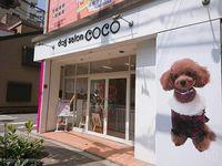 大阪市福島区 DOGHOTEL&SALON★COCO