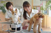 【松戸市五香】動物病院&ドッグカフェ併設☆とってもキレイなサロンです♪