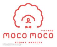 【天白野並】プードル専門店mocomoco 1人1日3頭まで 生体販売はありません!
