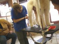 NewYork School of Dog Grooming